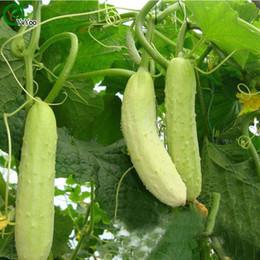 Cucumber Seeds Bonsai garden plant non-GMO organic vegetable seeds 50pcs R017