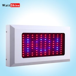 Wholesale 2015 Hot sells W LED Grow Light Full Spectrum Band x W Hydro Grow Light LED Free Hanging Kit flowers seed tomatoes