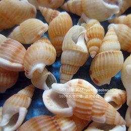 Wholesale Natural conch mini small starfish coral shells in the Mediterranean Beach Aquarium landscaping combination of conch shells
