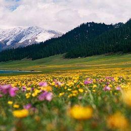 Like a cool flower wild chrysanthemums Wild flower seeds 100pcs multi-colored flower fairy garden plant