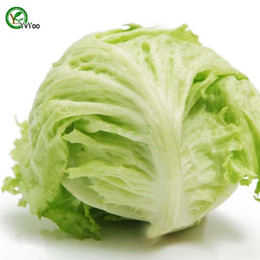 Lettuce Seeds Bonsai garden plant non-GMO organic vegetable seeds 100pcs R015