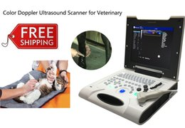 Wholesale Affordable Color Veterinary Ultrasound System EW C8V With Linear Probe L7L40 For Surface Testing Of Small And Large Animal