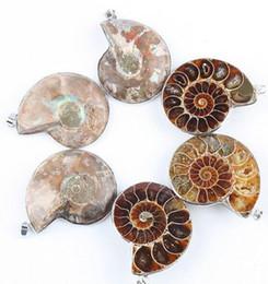 Wholesale Aoneitem Natural Ammonite Fossil Stone Gemstone Charms Pendant Bead PC