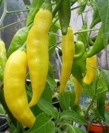 Bonsai Vegetable Lemon Drop HOT Chilli Seeds Organic Seeds Prolific garden decoration plant 20pcs A73