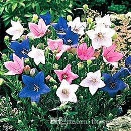 Wholesale 100 Blue Bell flower Seeds DIY Full of Bloom During the Season Garden