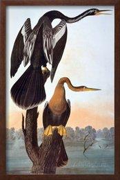 Wholesale John James Audubon decoration oil painting Anhinga famous artist reproduction