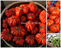 Vegetables seeds Tomato 'Marmande' RARE Seeds - 50 TOP Quality Seeds, household gardening DIY, shipping!