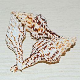 Wholesale Natural conch shells were coffee Nassarius conch shells DIY platform aquarium wedding decoration