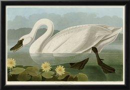 Wholesale John James Audubon decoration oil painting Common American Swan famous artist reproduction