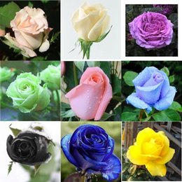 Free Shipping Colourful Rose Flower Seeds *100 Seeds Per Package*Cheap Balcony Potted Various Flowers Seed Garden Plants