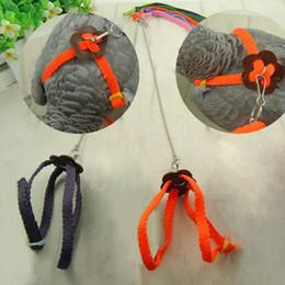 Wholesale Hot Sale Bird Harness Leash Adjustable Nylon Pet Collar Harness Hands Free Retractable Leash for Bird Parrot m A