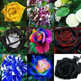 Wholesale Lovely Colors Rose Green Rose Flower Seed Colors Seeds Per Package Flower Seeds Home