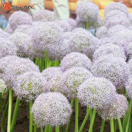 Wholesale White Giant Allium Seed Beautiful Flower Bonsai Plant Home Garden Particles