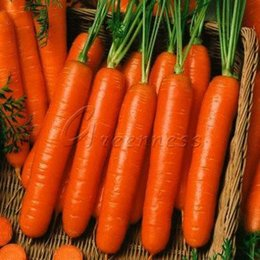 Wholesale 400 Carrot Little Finger Seeds High Germination Grow Heirloom can prevent night blindness and respiratory diseases