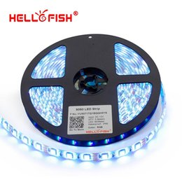 Wholesale trip light bulb Hello Fish m SMD IP65 Waterproof LED strip V flexible led m LED tape white warm white blue green red yell