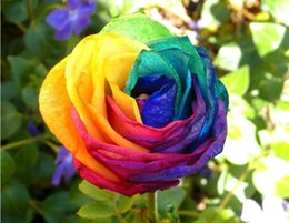 Wholesale New Arrival Hot Selling Patio Lawn Garden Supplies Rainbow Rose Seeds Pieces Seeds Per Package Garden Plants