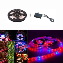 intdoor Led Grow Light Strip with driver Smd5050 Dc 12v Plant Grow Strip Garden Hydroponics