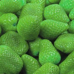 Seeds 50 PCS Strawberry Fruit Green Strawberry Seeds Bonsai Plants Seeds Rare Species of Fruits and Vegetables