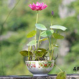 pink color  Bowl lotus water lily flower  bonsai Lotus seeds garden decoration plant 10pcs F127