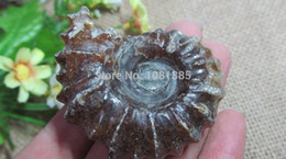 Wholesale Ammonite fossils of natural gem mineral specimen collection value to cure effect of g g