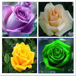 Скидка красные синие цветы 100pc / lot Роза Семена Голубой Красный Фиолетовый Розовый Черный Радуга Лепесток Растения Главная Сад Цветы Бонсай