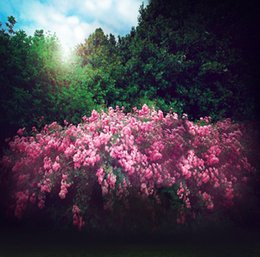 Blue Sky Jungle Pink Flowers Wallpaper Backgrounds Photo Studio Props 5X7ft Thin Vinyl Cloth Photography Backdrops