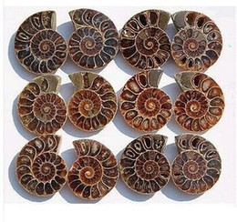 "1.6""pairs of Split Ammonite Fossil Specimen Shell Healing Madagascar-1pair"