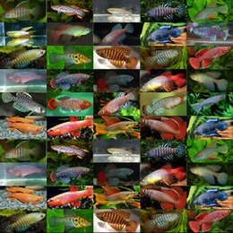 Wholesale Magic fish high hatching eggs medaka eggs tropical fish eggs pet magic fish in bulk