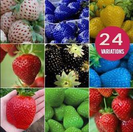 Wholesale Fruit seeds strawberry seeds DIY Garden fruit seeds potted plants kinds strawberry seeds