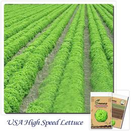 Vegetable Seeds 1 Bag 100 Seeds USA High Speed Lettuce