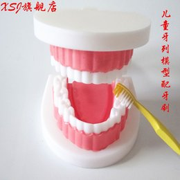 Wholesale Children dentition model Medical Study Equipment School Teaching Accessories Kid s medical science Tooth model Aids