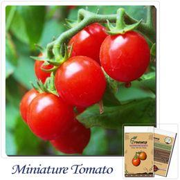 Vegetable Seeds 50pcs Miniature tomato (edible) seeds