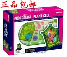 Wholesale D MASTER Plant Model Assembly plant cell model Puzzle cm cm cm