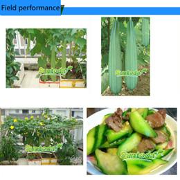 2017 heat Garden Asian vegetabl F1 hybrid NON GMO Asian vegetable DIY organic green fresh Smooth Luffa Dish Cloth Gourd Sponge Gourd seed