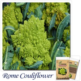 vegetable seeds,200pcs Romanesco broccoli lead form broccoli, Edible delicious! Bonsai vegetables, free shipping!