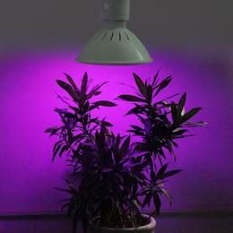 Acheter en ligne Led grow bleu ampoule-La nouvelle LED d'arrivée se développent la lumière Plein spectre 18w 36w 65w 80w Bleu rouge LED Grow Lampe Cultivez l'ampoule pour la plante de fleur Hydroponique