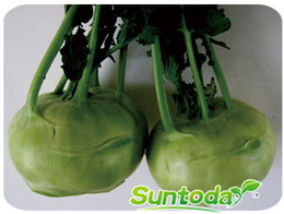 Suntoday Home &Garden Asian vegetable resistant to heat and cold kohlabi seeds