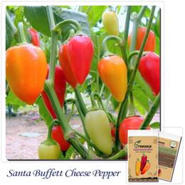 """Vegetables pepper seeds 50pcs""""SANTA FE GRANDE"""" COLORFUL MILD PROLIFIC PRODUCER"""