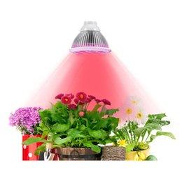 Acheter en ligne Led grow bleu ampoule-LED Grow Éclairage Bulb High Efficient Hydroponique Plant Growing Lights pour Jardin Serre Aquatique 12W e27 3 Bleu / 9 Rouge