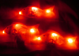 Acheter en ligne Mini-roches-Stands de vente de trois lumières rougeoyantes peu de pomme music rocking poisson / corps / électrique jouet fish lanterne poisson libre