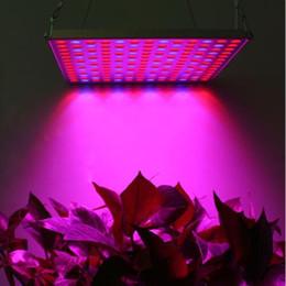 Скидка синяя панель Hot Sale 169 Leds 45W СИД растет свет панели Красный Синий Spectrum для парника гидропоники завод Цветок посев Освещение США / DE запас