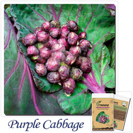 vegetables seeds Purple Cabbage Brussels Sprout ROZELLA 200 Heirloom Organic Seeds