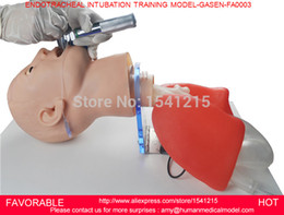 Wholesale MULTI FUNCTIONAL AIRWAY MANAGEMENT MODEL ENDOTRACHEAL INTUBATION TRAINER ENDOTRACHEAL INTUBATION TRAINING MODEL GASEN FAM0003