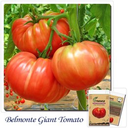 Fruits vegetables seeds 50pcs Giant Tomato ''Belmonte''!Delicious! Edible! new packing!