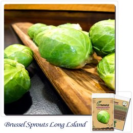 Vegetables seeds Brussel Sprouts Long Island Improved 200 Bonsai Survival Garden Heirloom NON-GMO Seeds