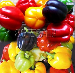 Wholesale 20PCS Color Yellow Puple Red Green White Mix Sweet Bell Pepper Seeds