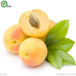 Wholesale Apricot tree Seeds Green Organic Vegetables and Fruit Seeds Delicious Particles V017