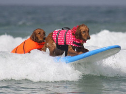 Safe Dog Lifejacket Pet Swimsuit Saver Preserver Life Jacket Floatation Vest Swimwear with Reflective Strip for Small Mediun Large Dogs
