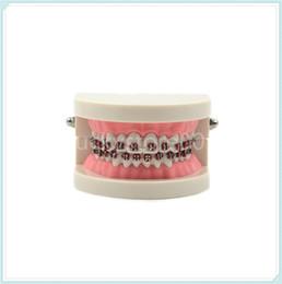 Wholesale Great Quality Dental Orthodontic Standard Teeth Tooth Model METAL Brackets LIGATURE TIES
