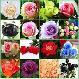9 COLORES ROSA SEMILLAS arco iris, púrpura, Rojo, Negro, Rojo, Blanco, Amarillo, Verde, Azul, Rosa semilla de la planta